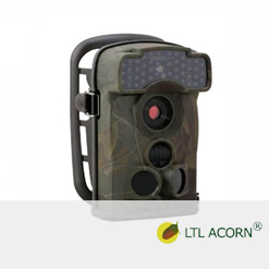 Ltl Alcorn